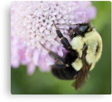 Bumble Bee close up Canvas Print