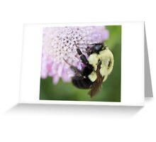 Bumble Bee close up Greeting Card