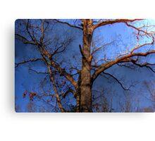 Tree Mapped Skies Canvas Print