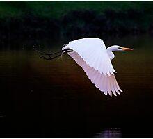 Flying Away  Photographic Print