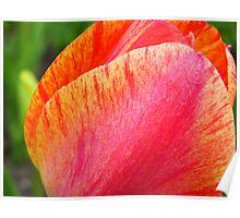 Tulip Textures 24 Poster