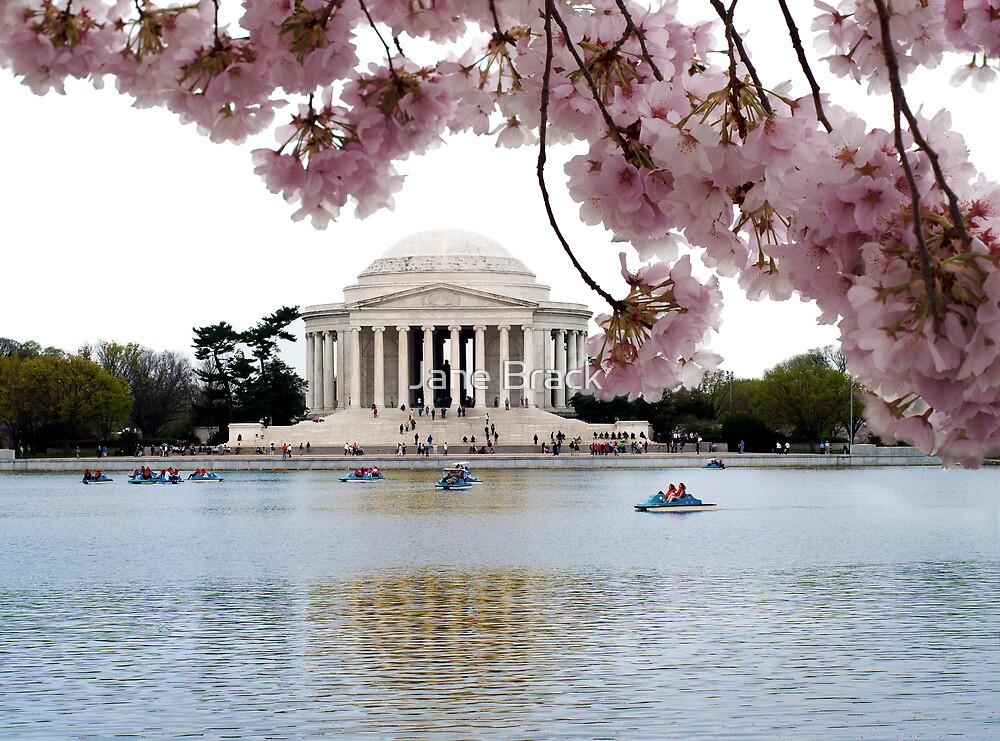 Blossoms Over Jefferson by Jane Brack