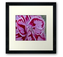 Two tone flower  Framed Print