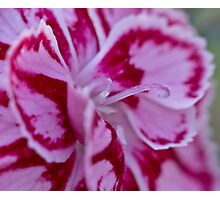 Two tone flower  Photographic Print