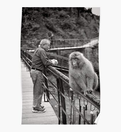 Common ground, opposing points of view. Snow Monkeys Poster