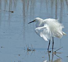 Snowy Egret by Brenda  Meeks