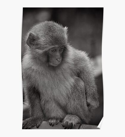 Now where did I put my toys? Snow Monkeys Poster