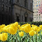 St. Ignatius Loyola Church and Yellow Tulips by Patricia127