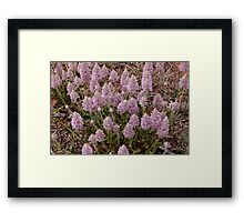 Mallee Forest and Wild Flowers Framed Print