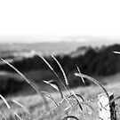 The Long Grass (B&W) - Byron Bay by Daniel Rankmore