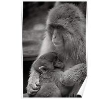 I just needed a hug. Snow Monkeys Poster