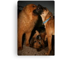 Three is more fun  Canvas Print