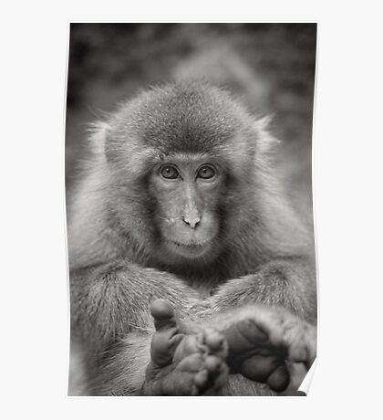 Kick back and relax. Snow Monkeys Poster