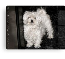 Rescues make the best pets... Canvas Print