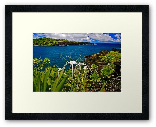 Hanna Coast by photosbyflood