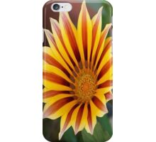 Single Flower Close Up Gazania Red Stripe iPhone Case/Skin