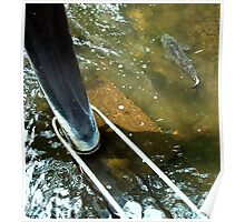 pond carp.... moving water Poster