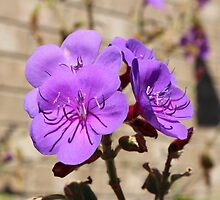 Flower test shot EOS 600D Canon  by Jack Miller
