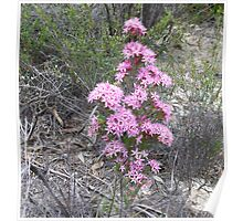 9. Mallee Forest and Wild Flowers Poster