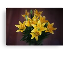 lily flowers on a black background  Canvas Print