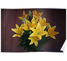lily flowers on a black background  Poster