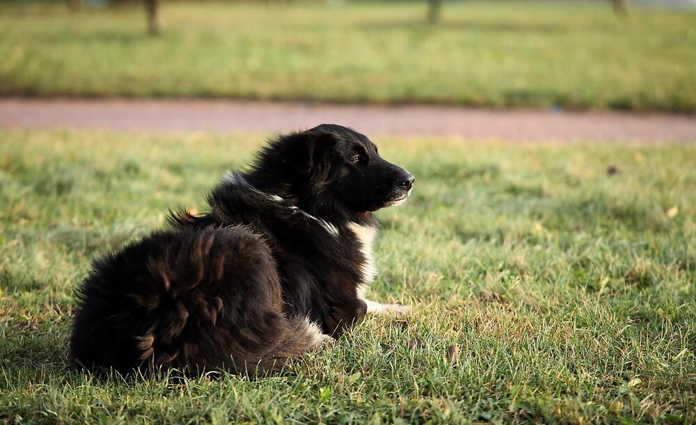 old dog by mrivserg