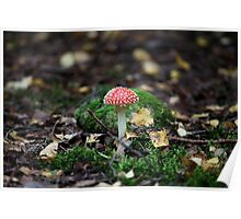 fungus agaric Poster
