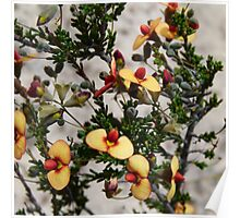 8. Mallee Forest and Wild Flowers Poster