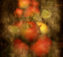 Somerset Apples by Alexandra Lavizzari