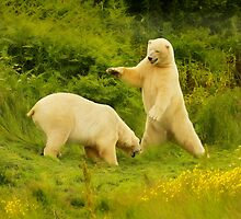 Polar Bear Fun by peaky40