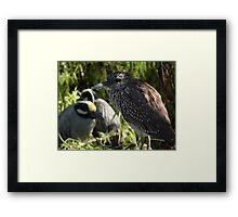 Heron - Garza Framed Print