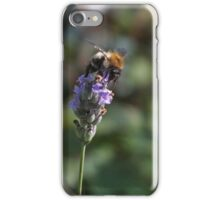 On A Lavendar iPhone Case/Skin