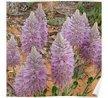5. Mallee Forest and Wild Flowers Poster