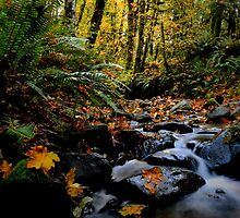 Bring Your Own Leaf by Charles & Patricia   Harkins ~ Picture Oregon