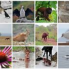Wildlife calendar link by Rob Emery