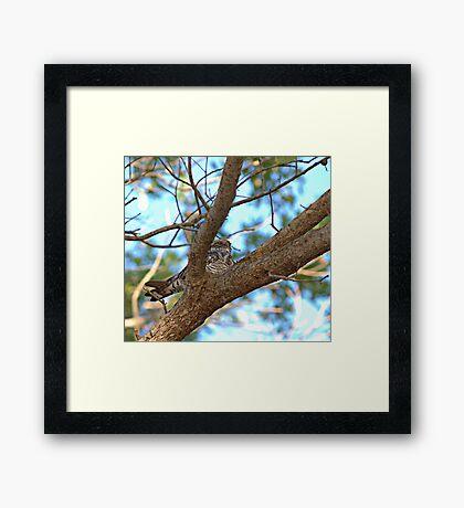 Bird Nap (Whip-poor-will) Framed Print