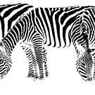 Three zebras in monochrome by arodericks