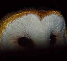 Barn Owl by photoworksbyjd