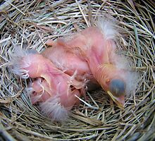 Robin Family June 4, 2009 by Ron Russell