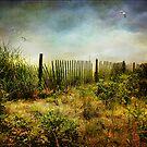 The Dunes by John Rivera