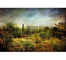 The Dunes Photographic Print