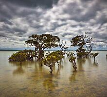 Tenby Point by Trevor Middleton