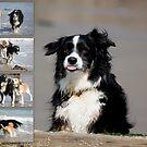 Beach Buddies by FelicityB