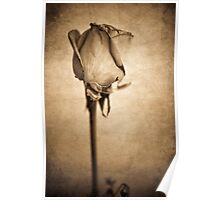 Solitaire Rose - Sepia Poster