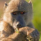 Breakfast greens by Explorations Africa Dan MacKenzie