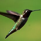 Hummingbird XXX by loiteke