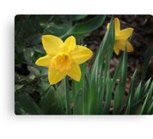 Spring Gold Canvas Print