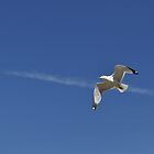 Action - Seagull by Majameath