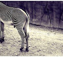 Zebra butt by Sookie Sookie