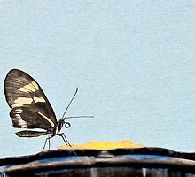 Butterfly and Nectar by KathleenRinker